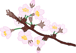 Japan-tresnjin-cvijet